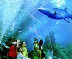 Oregon Coast Beach Connection News Dive And Snorkel At The Aquarium