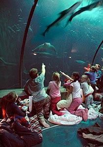 Oregon Coast Aquarium Starts Up Summer