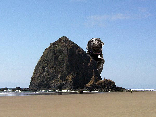 Dog Friendly Cannon Beach Rentals