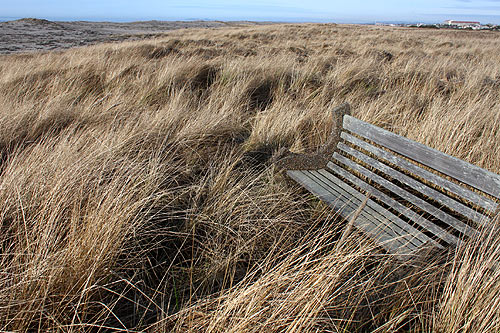 these dunes did not exist 100 years ago in Gearhart, and this bench would be in the surfline