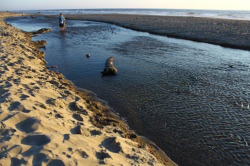 D River Wayside Oregon Coast Shortest River In The World