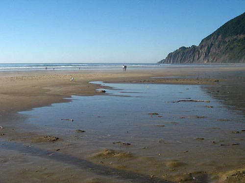 Manzanita during summer high sands