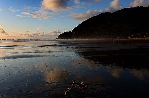 Photo: Manzanita. This area will host the plant sale on April 30