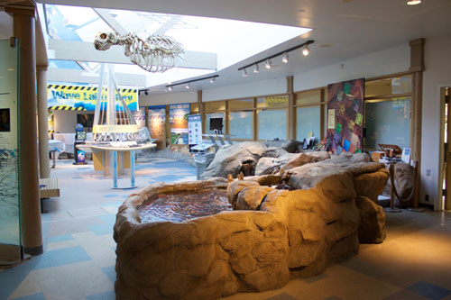 Oregon Coast's Hatfield Marine Science Center Fully Reopens for Spring Break