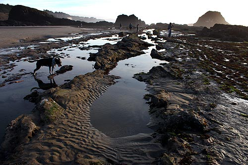 Seal Rock Oregon A Little Bit North Of Yachats And Tad South Newport The Central Coast Hosts Kind Wild Card Geologic Oddities
