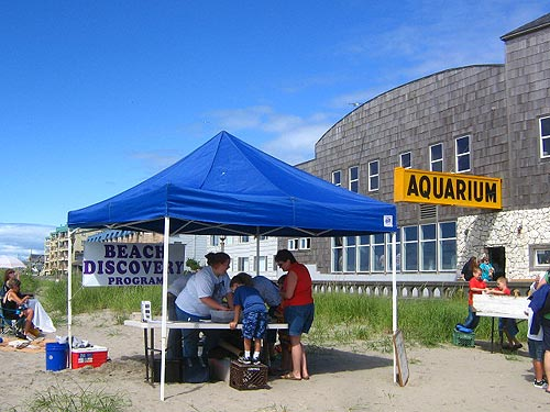 Seaside Beach Discovery Program