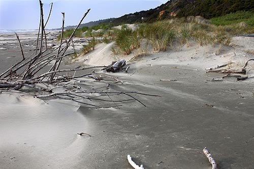 Driftwood Beach State Recreation Site, where new campsites will be available